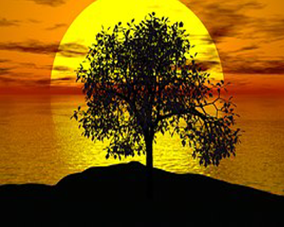 Photoshopped Photo of yellow Sun at the water horizon orange Sky and black shadowed Tree on Waterbank Ground